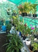 planting_shadehouse