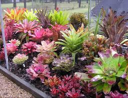 plants_bromeliad