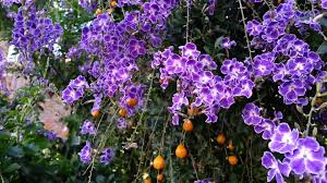 plants_geishagirl